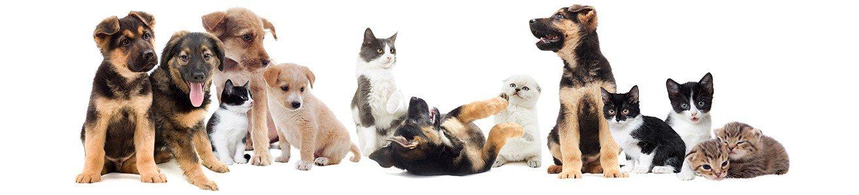 Dyrefodder til hunde og katte