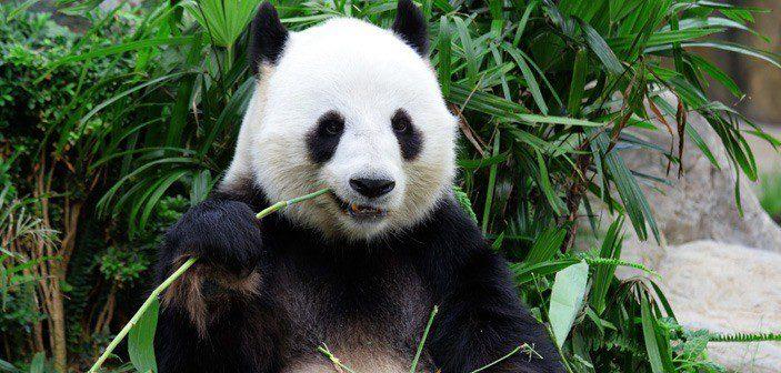 Nu-er-Google-Panda-virkelighed