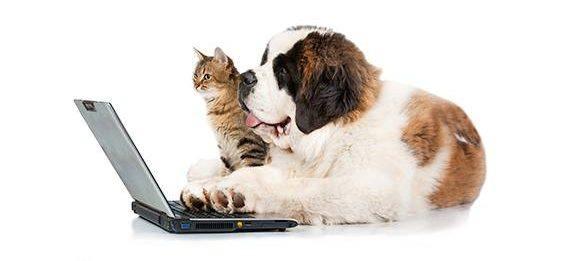 hund googler hundemad